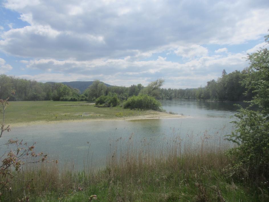 Mehr Freiheit für die Flüsse gefordert