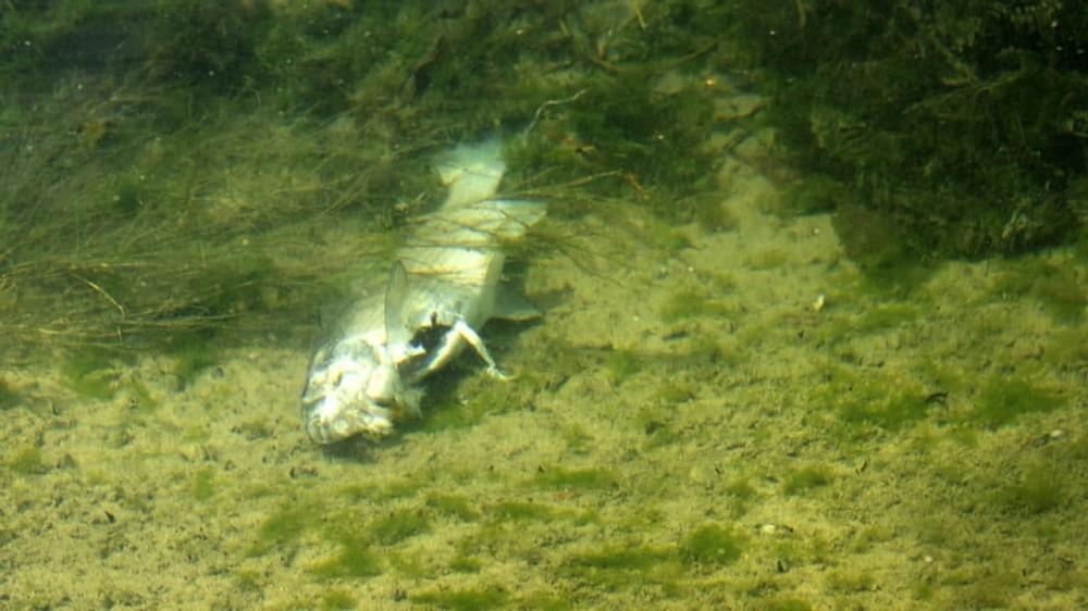 Giftstoffe in Gewässern: Das sind die problematischsten Pestizide
